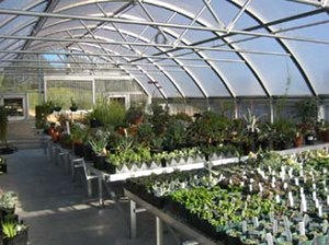 Cabrillo College Annual Plant Sale, May 9-11
