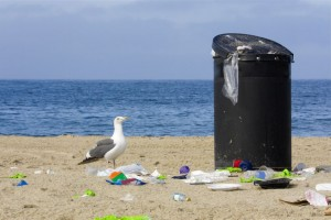 Hidden Beach Cleanup Set for February 13