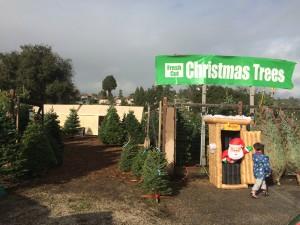 Best Santa Cruz Christmas Tree Lot is in Aptos